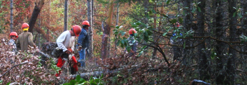 Forest Contracting Nationwide