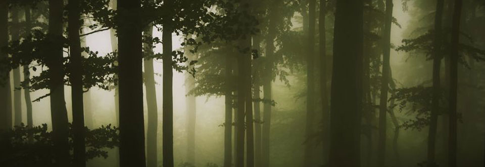 sffogforest