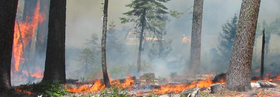 Fire Prevention, Fire Suppression
