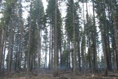 Summitt Forests Gallery