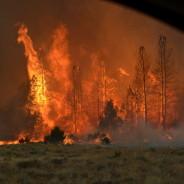 Southern Oregon Forests Under Seige